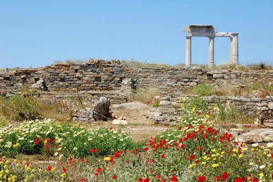 Greece photography Yellow Spring flowers bloom among the ancient Columns Delos Island Greece Print Available Framed and Digital Download