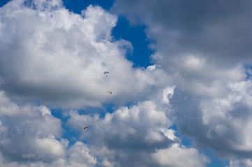 sea gull and Glider, sky, clouds