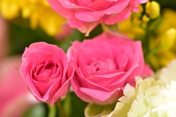 薔薇のアップ