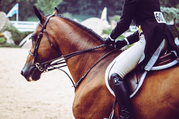 Horse and Rider on Hunter Jumper Course