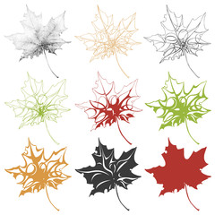 Illustration with a set of colorful maple leaves on a white background