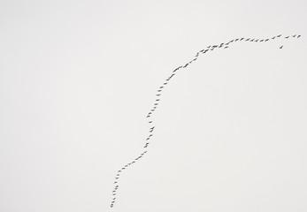Birds line 3