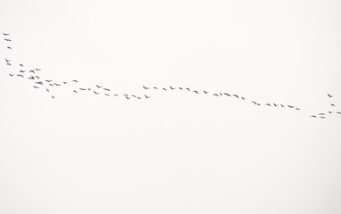 Birds line 2