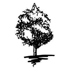 Monochrome tree silhouette sketched line art isolated vector