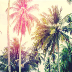 Palm Trees Jungle Toned Landscape Tropical View