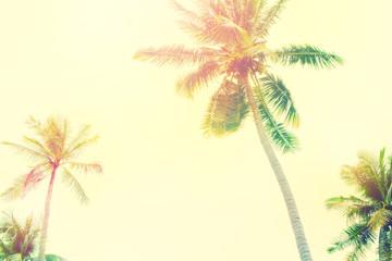 Palm Trees Jungle Toned Landscape Tropical View