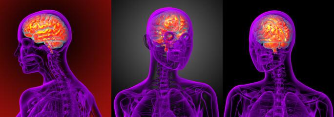 3d rendering medical illustration of the brain