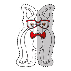 cute french bulldog male with hipster accessory vector illustration design