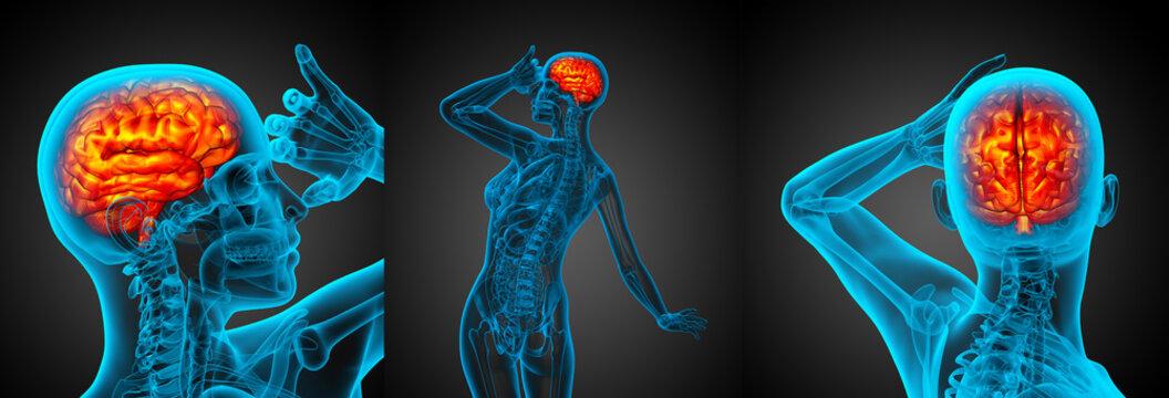 3d rendering medical illustration of the human brain
