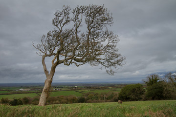 Tree on the edge of Dartmoor