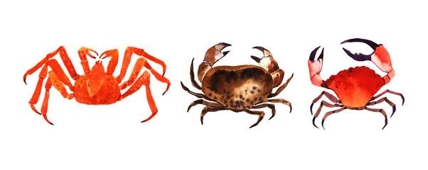 Watercolor crab illustration.
