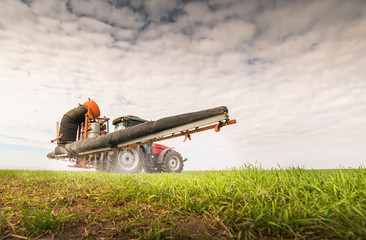 Fotomurales - Tractor spraying pesticide on wheat field with sprayer
