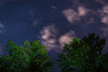 Silhouette of the forest in the night sky