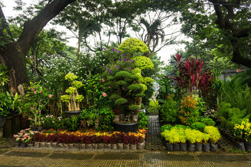 Various kind of plant, bonsai tree and flower arranged like a little jungle and sell by florist photo taken in Jakarta Indonesia