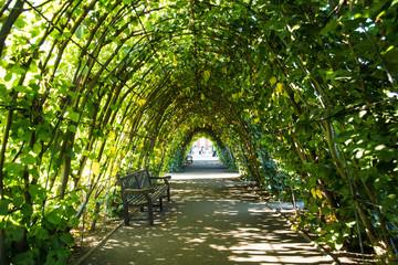 Canopy Garden Pathway