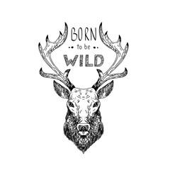 Hand drawn vector wild forest illustration