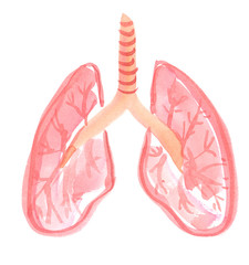 Abstract anatomical scheme of healthy human lungs painted in watercolor on clean white background