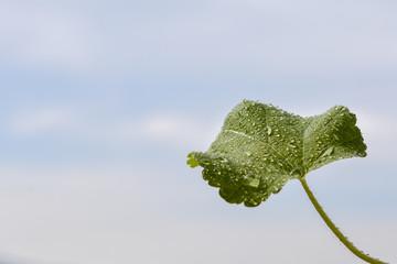 Grünes Blatt mit spielenden Wassertropfen