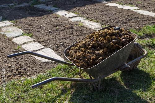 Horse Manure On Garden