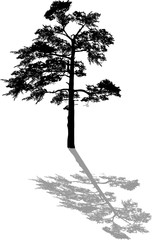 black one pine large silhouette with shadow