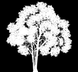 white tree silhouette isolated on black