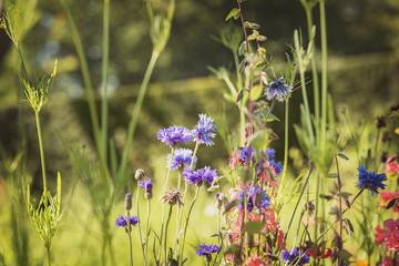 Wild summer meadow