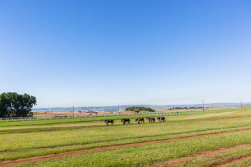 Race Horses Grooms Training Landscape