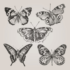 Tuinposter Vlinders in Grunge Set of hand drawn butterflies isolated on white background. Butterfly in sketch style. Retro hand-drawn vector illustration.