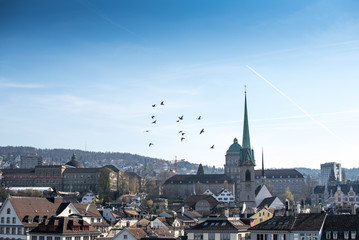 Cityscape birds flying over Historic Zurich center