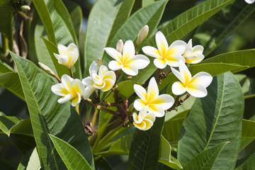 Beautiful flowers of Israel,