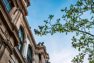 Magnolias devant le Palais de la Bourse de Lyon