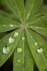 Overhead view of water drops on plant