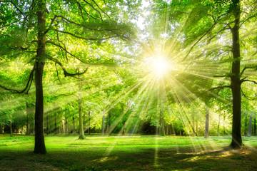 Waldlichtung im Sonnenschein