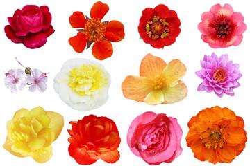 Flower Head Collage