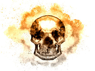 Watercolor image of straight face human skull