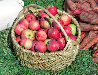 The apples in the basket are sold at the fair.