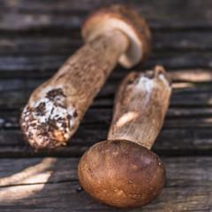 Porcini Mushrooms on Wooden Background