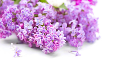 Fotoväggar - Lilac flowers bunch over blurred background