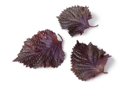 Fresh red shiso leaves