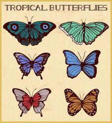 Tropical butterflies in frame
