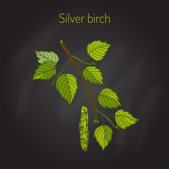 Silver birch branch with leaves