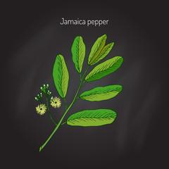 Allspice aromatic plant