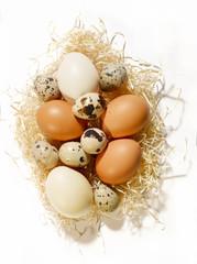 tre varietà di uova