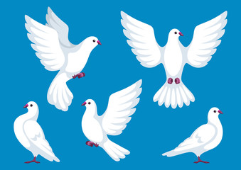 Set of five white doves. Beautiful pigeons faith and love symbol