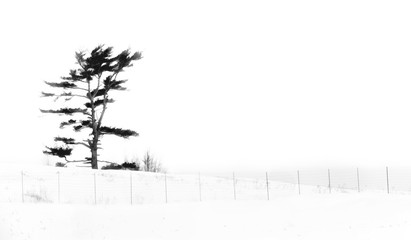 Minimalistic abstract drawing effect of tree and fence silhouette in snow with white background