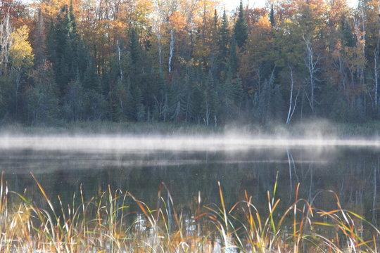 cattails on misty Minnesota lake