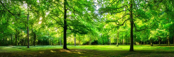 Grüne Wald Landschaft als Panorama im Sommer