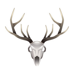 Fotorolgordijn Aquarel schedel Deer skull front view isolated vector