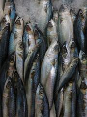 Çeşit çeşit balık