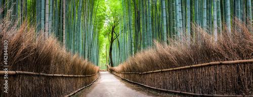 Japanischer Bambuswald In Arashiyama Kyoto Japan Stock Photo And